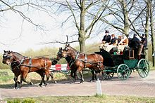 A team of four bay (brown with black mane and tail) horses trotting along a cobblestone path with trees and fields in the background. They are pulling a green carriage in which several people ride.