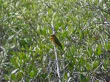 A bird perched among mangrove branches