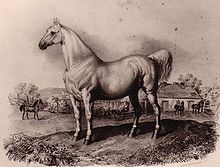 A muscular horse stands in the foreground, with more horses, fencing and a building in the background.