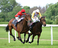 Two horses racing along a grass racetrack, the horses are side by side with both jockeys urging the horses faster.