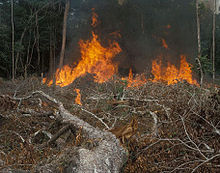 A controlled burn progressing as flames engulf a small area of vegetation