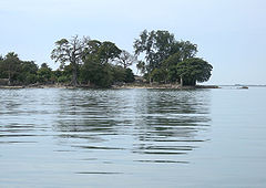 An island with large trees and their reflections in the water below