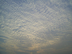 A large field of cirrocumulus clouds in a blue sky, beginning to merge together near the upper left.
