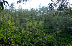 Thick stands of trees