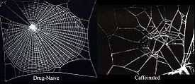 "Left: picture of a regular spider web with a caption ""drug-naive"", right: heavily distorted spider web with a caption ""caffeinated""."