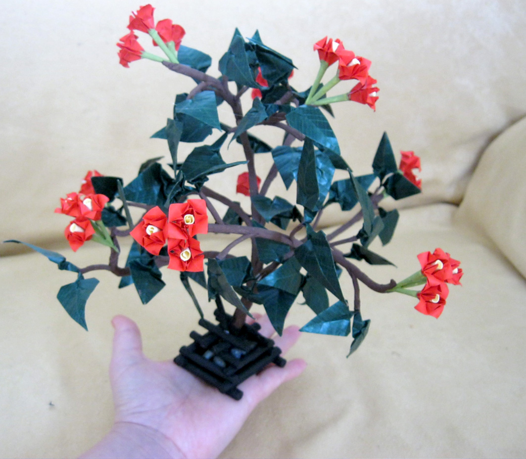 Origami Nut Spring An Example Of Bonsai