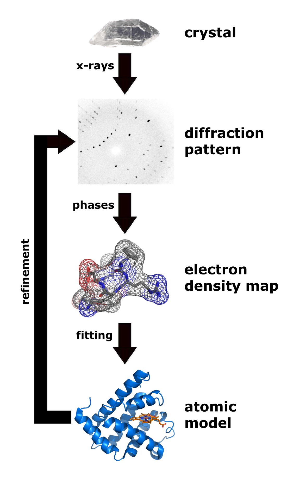 Molecular models of dna dna structure determination using molecular modeling and dna x ray patterns ccuart Image collections